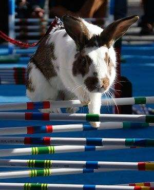 Easter Bunny Hop Competitions - This Real Life Bunny Hop Competition is Adorably Festive