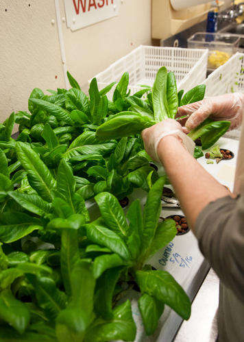 Indoor Reclaimed Farms - The Plant Chicago is a Food Business Incubator