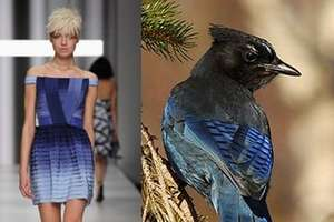 Bird-Inspired Designs