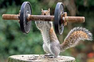 These Images Capture Curious Squirrels Doing Very Human Things