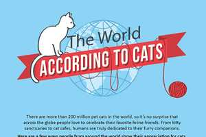Cheapflight.com's Cat Infographic Depicts Cats' Lifestyles World-Wide