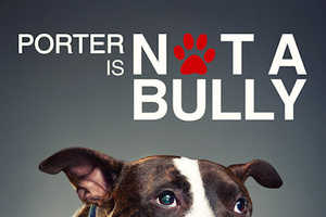 'Not a Bully' is an Ad Campaign Hoping to Stop Pitbull Abuse