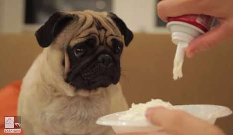 Comical Canine Food Critics - Pablo the Food Critic Pug Offers His Expert Opinion on Human Foods