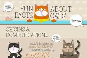 This 'Fun Facts About Cats' Infographic Discusses Origins and Stats