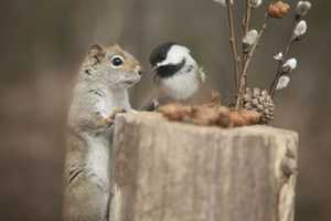 Andre Villeneuve Snapped an Unlikely Animal Friendship