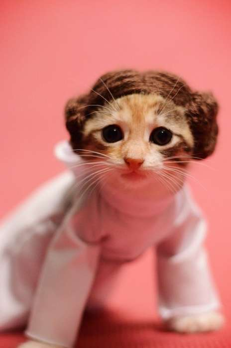 Galactic Feline Cosplays - This Adorable Tabby Cat is Dressed Up in a Princess Leia Costume