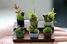 Ultra Small Bonsai Trees - Cho-Mini Bonsai are Made with Cramped Spaces in Mind