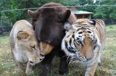 Noah's Ark Animal Sanctuary Owns a Lion, Tiger and Bear Who are Friends