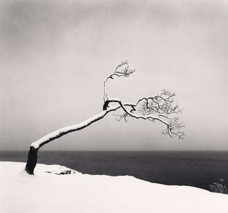 Timelapse Tree Photography - This Whimsical Tree Photo Series is Hypnotizing