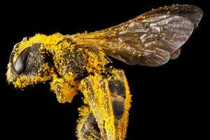 Sam Droegetakes Snaps Close-Ups of Beautiful Bees
