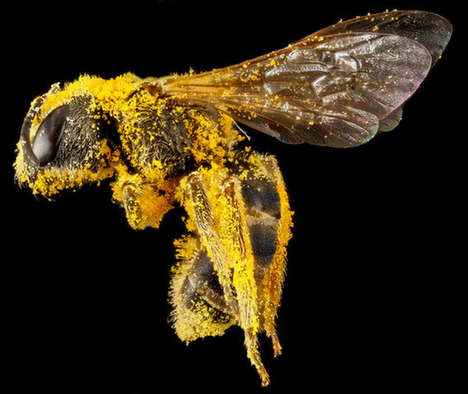 Microscopic Bee Photography - Sam Droegetakes Snaps Close-Ups of Beautiful Bees