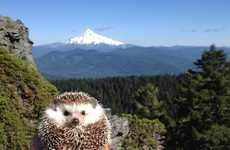 Adventurous Hedgehog Photography - Biddy the Hengdehog Travels the World with His Owners