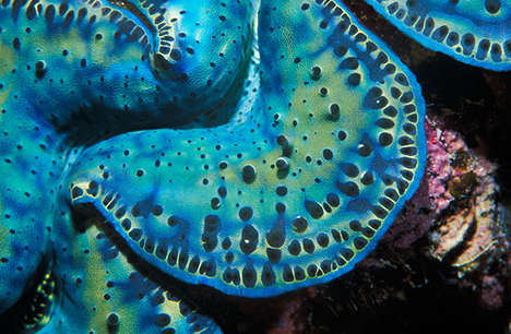 Psychedelic Marine Photography - This Underwater Photo Series is Stunning and Vivid