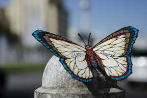 Andreas Preis's Butterfly Art Carries Encouraging Messages