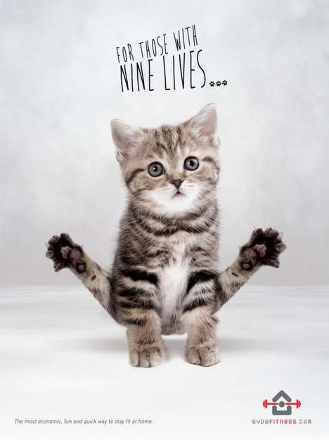 Feline Fitness Ads - Evdefitness' Fitness Workout Advertisements Stars Cats Who Are Sweating It Out