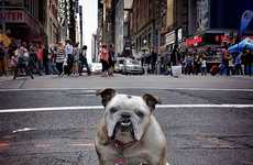 New York Canine Photography
