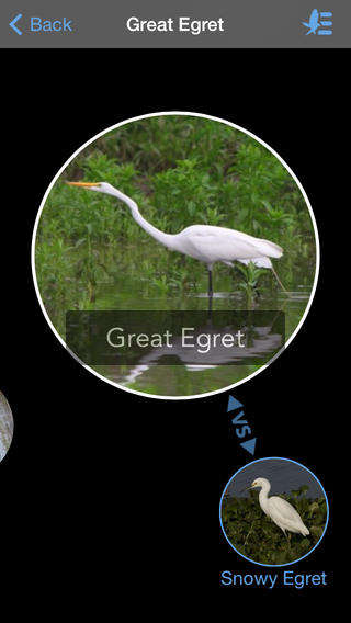 Avian Recognition Apps - The Birdsnap App Can Recognize 500 North American Bird Species