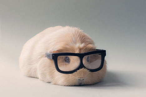 Guinea Pig Photography - BooBoo and Friends Come Together in an Adorable Portrait Series