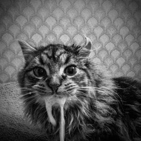 Feral Feline Photography - This Monochrome Cat Photography Series is Strikingly Haunting