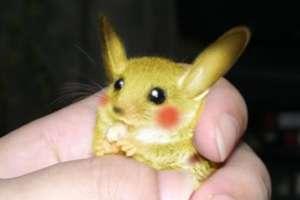 $925 Million Living Pokemon Pikachu