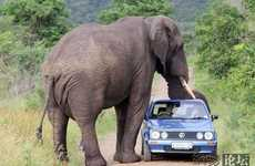Awkward Situation Photography - 5 Car Mishaps