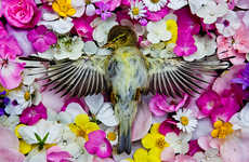 Fallen Animal Photography - This Dead Animal Photo Series is Somberly Beautiful