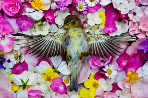 This Dead Animal Photo Series is Somberly Beautiful