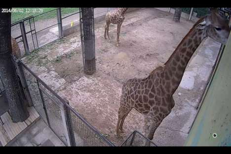 Virtual Zoo Tours - You Can Now Learn About Animals Through the Livestreamed Beijing Zoo Website