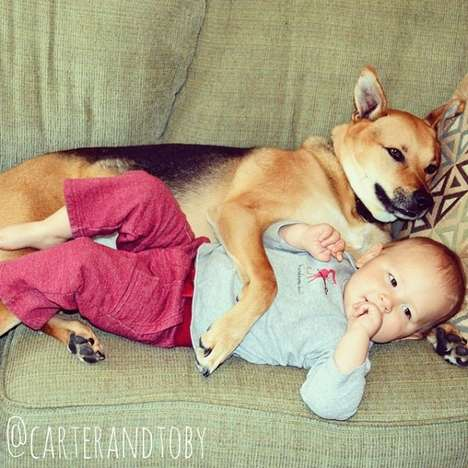 Rescue Dog Photography - This Carter and Toby Instagram Account is Cute and Sweet
