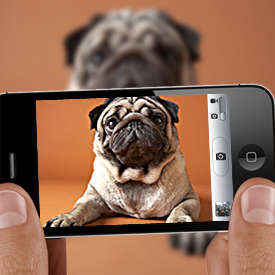 Mobile Bill Paying - Picture Pay Allows People to Pay Their Bills By Snapping a Smartphone Photo