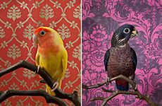 Vibrant Fowl Photography - 'Bird of a Feather' Pairs Exotic Birds with Vintage Wallpaper