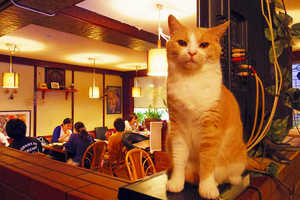 Tokyo's Cat Pub is Like a Grown-Up Cat Cafe