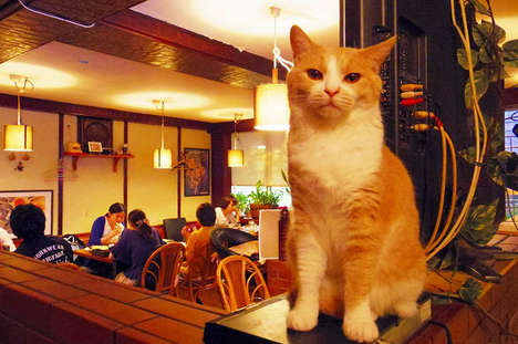 Cozy Cat Pubs - Tokyo's Cat Pub is Like a Grown-Up Cat Cafe