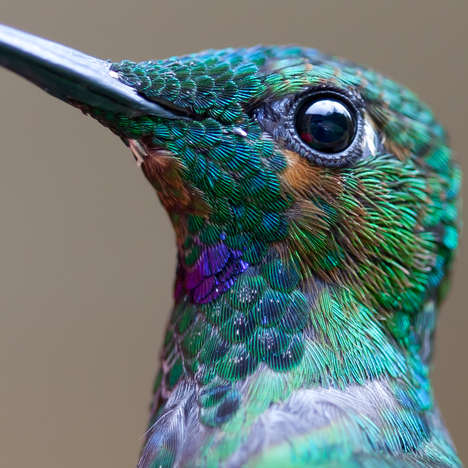 Macro Hummingbird Photography - Photographer Chris Morgan Shoots Detailed Pictures of Birds