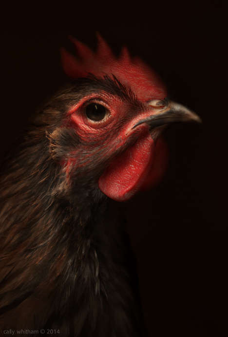 Aristocratic Rooster Portraits - Poultry III by Cally Whitham Classically Captures Courtly Chickens