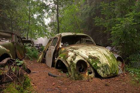 Abandoned Arboreal Autos - These Old Cars Have Been Left in the Forest for 70 Years