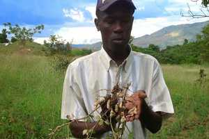 Acceso Peanut Enterprise Corporation is a Haitian Innovation