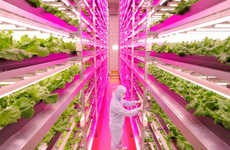 LED Lettuce Operations - The Mirai Co. Lettuce Farm Uses Special Lighting to Optimize Plant Growth