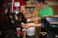 Monkey Movie Screenings - The Dawn of the Planet of the Apes Movie Had Two Chimps Attend Its Opening