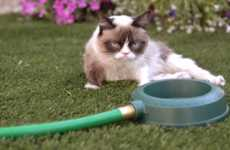 The Pouty Grumpy Cat Music Video for Purina is Called 'Cat Summer'