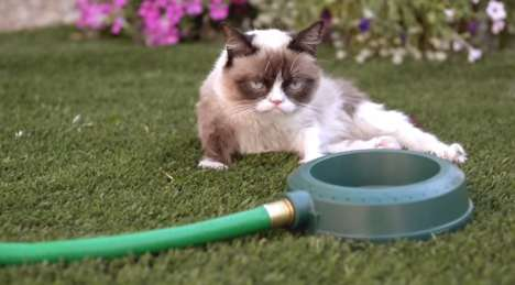Musical Meme Videos - The Pouty Grumpy Cat Music Video for Purina is Called