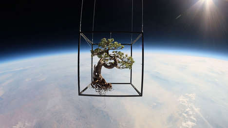 Space-Bound Bonsais - Artist Azuma Makoto Sent Two Floral Arrangements Above the Earth