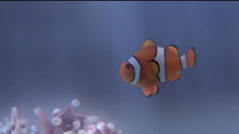 Clownfish-Killing Commercials - This Controversial Ad Aims to Protect the Great Barrier Reef