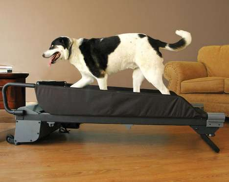 Pet Treadmills - The PetZen DogTread Dog Treadmill Helps Animals Stay in Shape