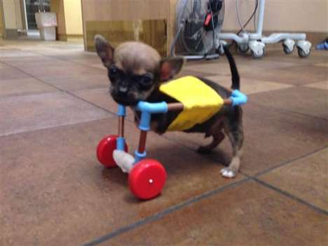 Adorable Canine Wheelchairs -