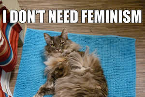 Confused Cats Against Feminism is a Hilarious Parody