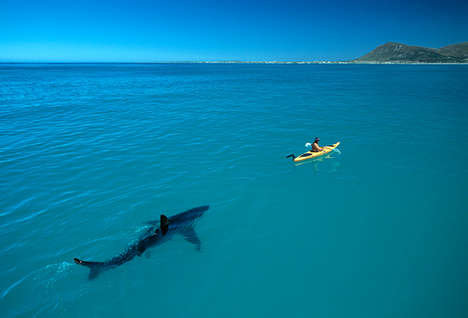 Noble Shark Photography - 'Sharks and People' Dispels Popular Preconceptions