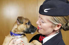 Pet-Centric Airline Channels - British Airways Has a New In-Flight TV Channel That's All About Pets