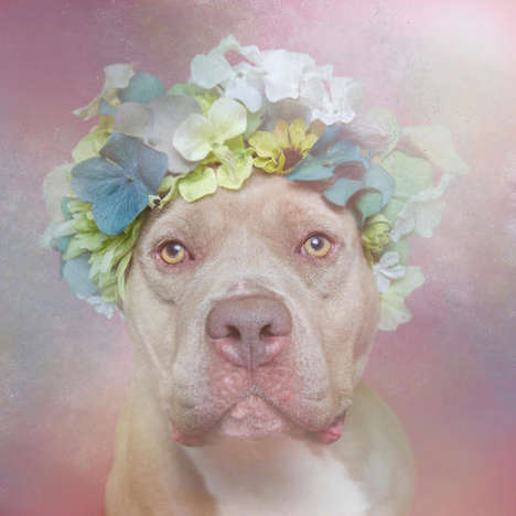 Ethereal Pit Bull Portraits - Flower Power by Sophie Gamand Helps Dispel Fear of Big Dogs