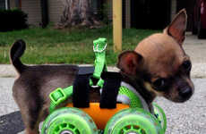3D-Printed Chihuahua Wheelchairs - Turbo.Roo the Two-Legged Chihuahua Has a Custom-Made Wheelchair